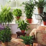 plante benefice