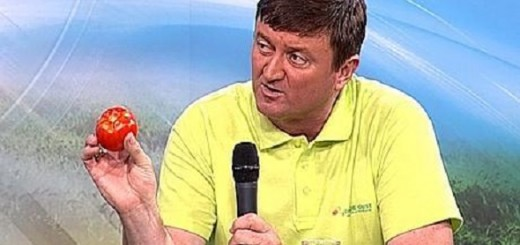 Gheorghe-Vlad-producator-rosii-romanesti