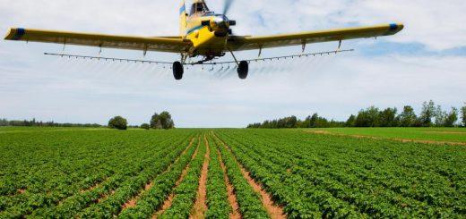 fungicide in agricultura
