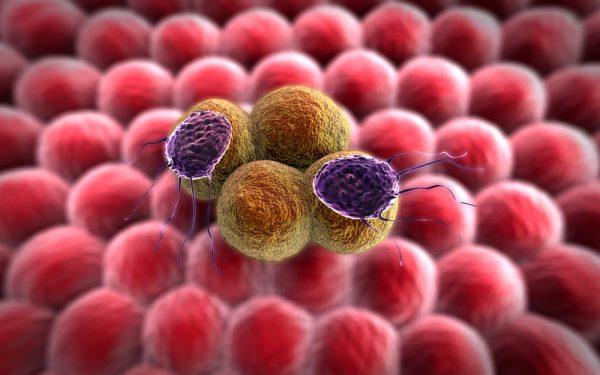 celule-canceroase