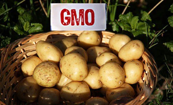 cartof-gmo