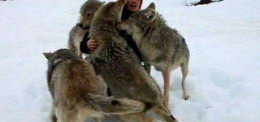 haita-de-lupi