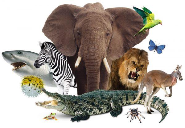 animal_kingdom_nzwbda
