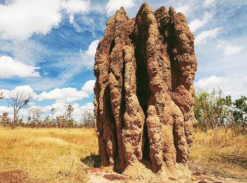 musuroi-termite
