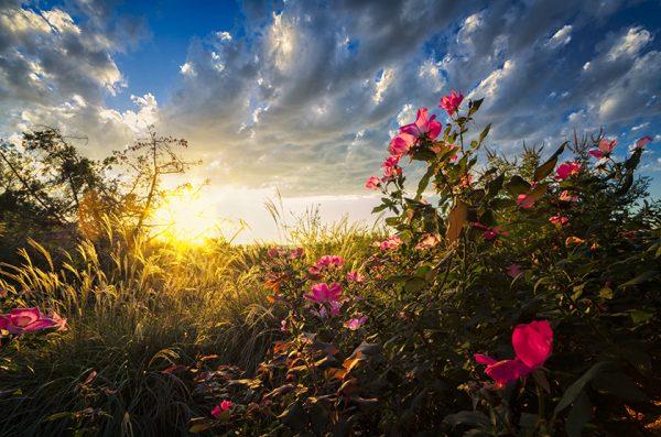 peisaj flori