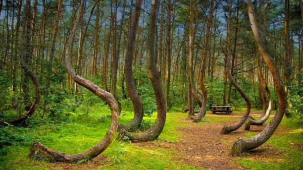 hoia-forest-the-5-freakiest-places-on-earth