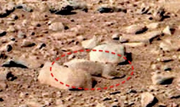Mars-rat