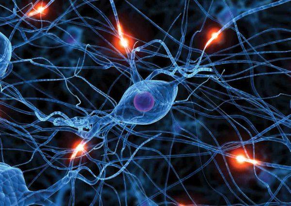 active neurone