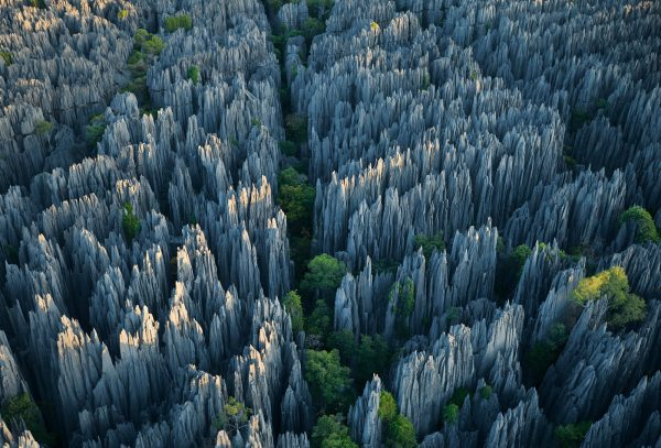Stone-Forest-1