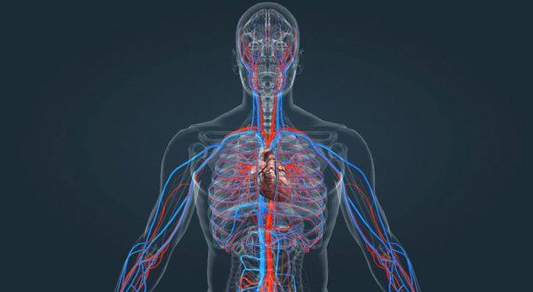 sistem circulator